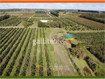 https://www.gallito.com.uy/vendo-quinta-de-20-has-en-plena-produccion-melilla-inmuebles-20135626