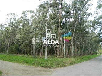 https://www.gallito.com.uy/terreno-en-bella-vista-inmuebles-13913780