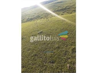 https://www.gallito.com.uy/campo-ruta-8-km-206-inmuebles-20174133