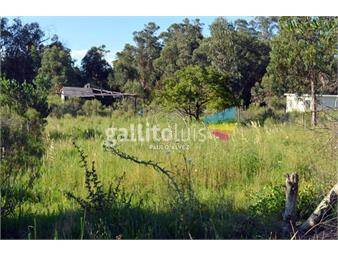 https://www.gallito.com.uy/terrenos-venta-punta-negra-te527-inmuebles-20207076