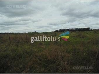 https://www.gallito.com.uy/terreno-en-carmelo-zona-de-colonia-estrella-buena-ubicaci-inmuebles-19280170