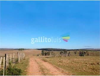 https://www.gallito.com.uy/forestacion-proximo-a-mariscala-ref-1544-inmuebles-20384748