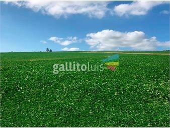 https://www.gallito.com.uy/campo-en-soriano-ref-8011-inmuebles-20384991