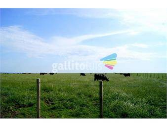https://www.gallito.com.uy/campo-a-7-km-de-pueblo-grecco-897-ha-coneat-84-y-152-pr-inmuebles-20393307