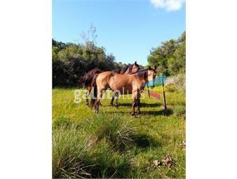https://www.gallito.com.uy/campo-agricola-ganadero-sobre-ruta-13-a-5-kilometros-de-ai-inmuebles-20422516