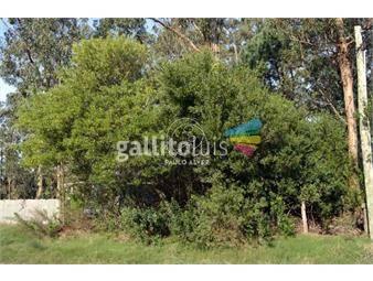https://www.gallito.com.uy/terrenos-venta-punta-negra-te686-inmuebles-20457689