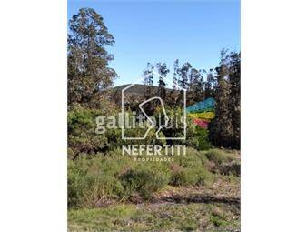 https://www.gallito.com.uy/oportunidad-excelentes-terrenos-en-nuevo-fraccionamiento-inmuebles-20380238
