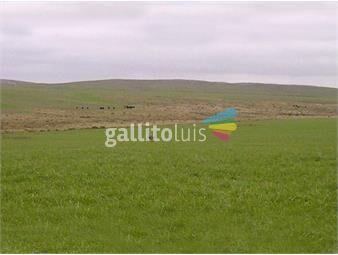 https://www.gallito.com.uy/campo-en-florida-ref-2733-inmuebles-18499845