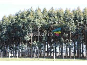 https://www.gallito.com.uy/venta-campo-ganadero-forestal-en-florida-inmuebles-20380116