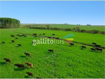 https://www.gallito.com.uy/campo-en-flores-ref-5029-inmuebles-20524756