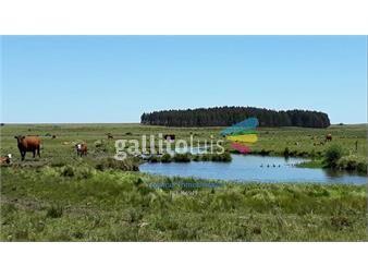 https://www.gallito.com.uy/venta-de-campo-ganadero-sarandi-del-yi-inmuebles-20557066