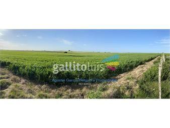 https://www.gallito.com.uy/campo-agricola-ganadero-inmuebles-20610711