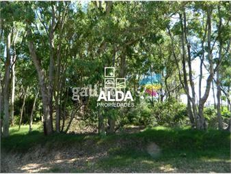 https://www.gallito.com.uy/terreno-en-bella-vista-ref-te300190-inmuebles-20626541