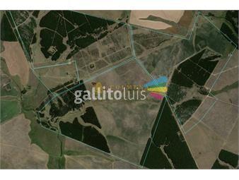 https://www.gallito.com.uy/campo-forestal-en-durazno-consulte-inmuebles-20635711