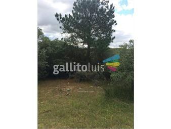 https://www.gallito.com.uy/oportunidad-campo-con-pozo-semisurgente-agua-mineral-inmuebles-13551045