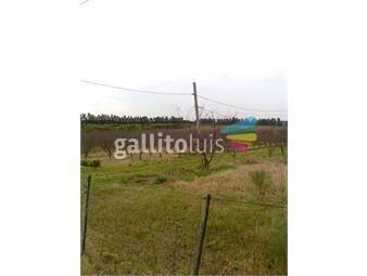 https://www.gallito.com.uy/ruta-5-km-29-excelente-terreno-con-317m-de-frente-inmuebles-12519532