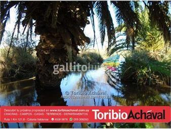 https://www.gallito.com.uy/campo-pegado-a-planta-urbana-inmuebles-13917180