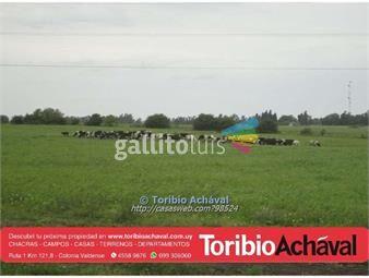 https://www.gallito.com.uy/campo-buenas-fracciones-agricolas-inmuebles-13917598