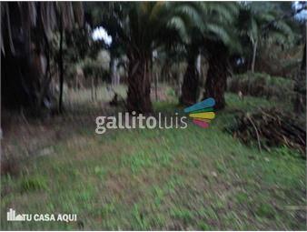 https://www.gallito.com.uy/extraordinario-terreno-sobre-camino-maldonado-y-libia-inmuebles-12876890