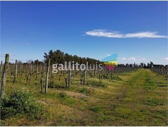 https://www.gallito.com.uy/terreno-en-venta-inmuebles-17360550